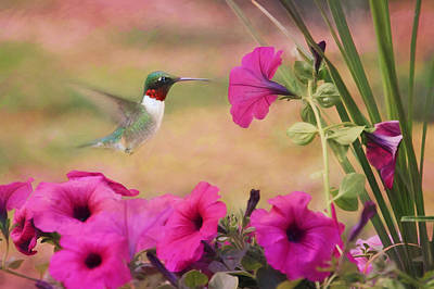 Hummingbird Mixed Media - Petunia Lover by Lori Deiter