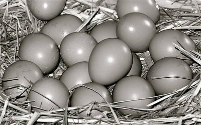 Gamebird Photograph - Pheasant Eggs by Karon Melillo DeVega