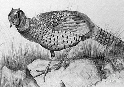 Pheasant In The Wild Original by Roy Anthony Kaelin