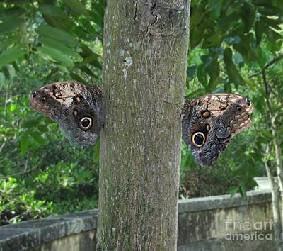 Photography Of Butterfly Symmetry Print by Mario  Perez