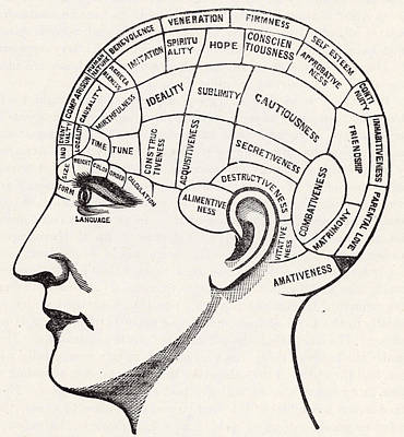 Phrenology Print by English School