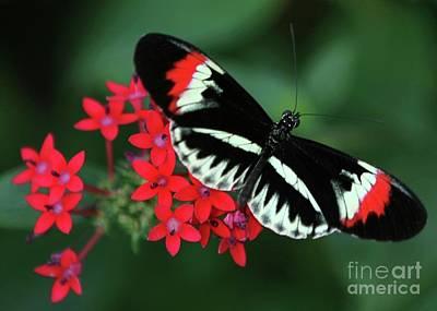 Piano Key Butterfly Print by Sabrina L Ryan