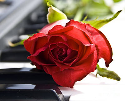 Piano Rose Print by Sophie De Roumanie