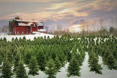 Photograph - Pick Your Tree by Lori Deiter