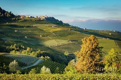 Fall Wine Grapes Photograph - Piemonte View by Brian Jannsen