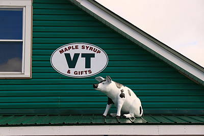Vermont Country Store Photograph - Pig On A Hot Tin Roof by Allen Beatty