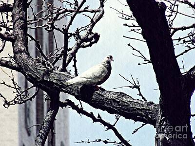 Pigeon Digital Art - Pigeon In A Tree by Sarah Loft