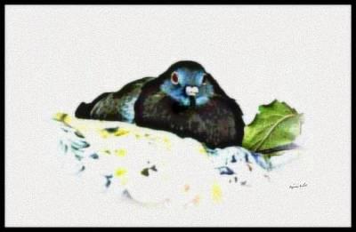 Mixed Media - Pigeoness by YoMamaBird Rhonda