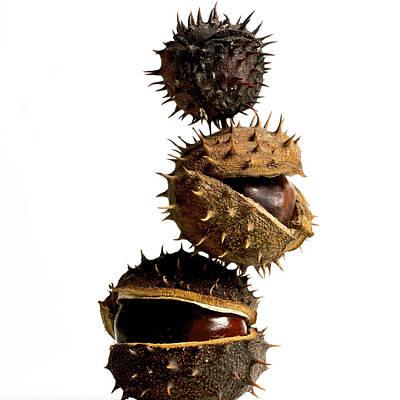 Pile Of Chestnuts Print by Bernard Jaubert