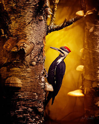 Pileated Woodpecker Forest Sunrise Print by Bob Orsillo
