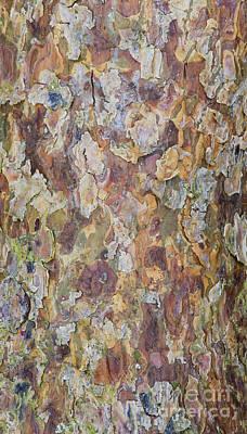 Pine Bark Print by Tim Gainey