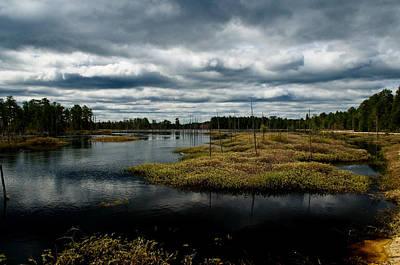 New Jersey Pine Barrens Photograph - Pine Barrens by Louis Dallara