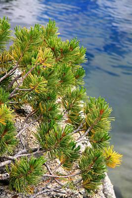 Pine Needles Over Water Print by Chris Brannen