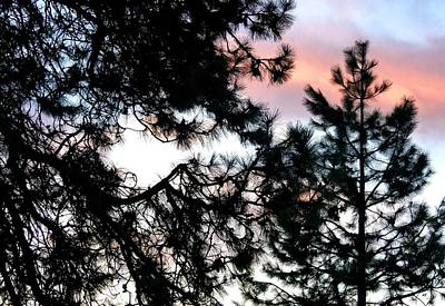Pine Silhouettes At Sundown Print by Will Borden