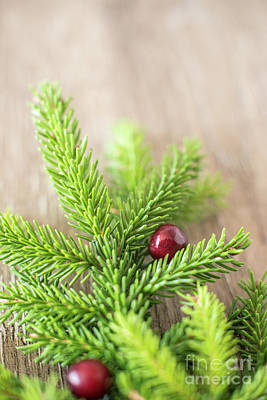 Pine Needles Photograph - Pine Tree Needles by Taylor Martinsen