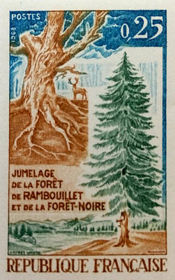 Pine Tree Of France Original by David Call