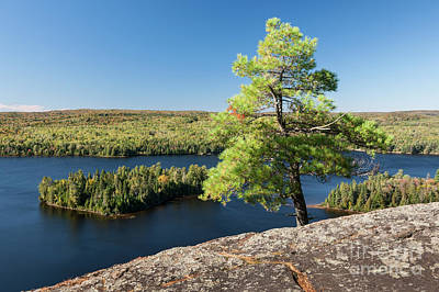 Pine Tree With A View Print by Elena Elisseeva