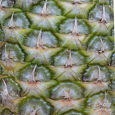 Nature Photograph - Pineapple Close-up by Marv Vandehey