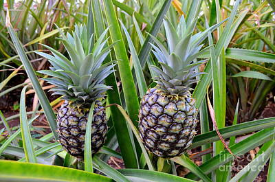 Photograph - Pineapple Duo by Mary Deal
