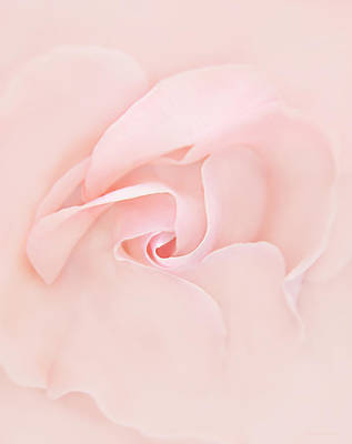 Pink Abstract Rose Flower Print by Jennie Marie Schell