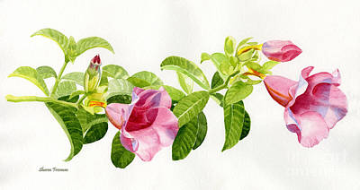 Vines Painting - Pink Allamanda Blossoms On A Branch by Sharon Freeman