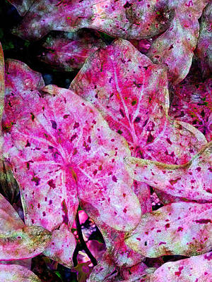Abstract Art Photograph - Pink Caladium by Diane DiMarco