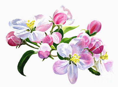 Apple-blossom Painting - Pink Apple Blossoms by Sharon Freeman