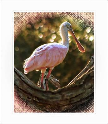 Spoonbill Digital Art - Pink Beauty Of Bennetts Creek by Sheri McLeroy