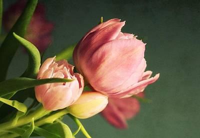 Purple Flowers Digital Art - Pink Blooms by Cathie Tyler