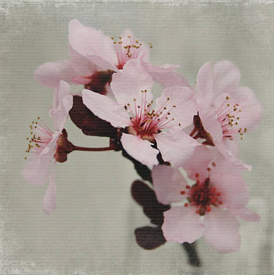 Pink Blossoms 1- Art By Linda Woods Print by Linda Woods