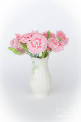 Photograph - Pink Carnations 1 by Steve Purnell