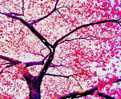 Sakura Painting - Pink Cherry Blossom by Lanjee Chee