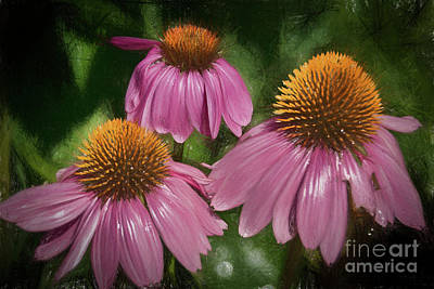 Colored Pencil Painting - Pink Cone Flowers  by Janice Rae Pariza