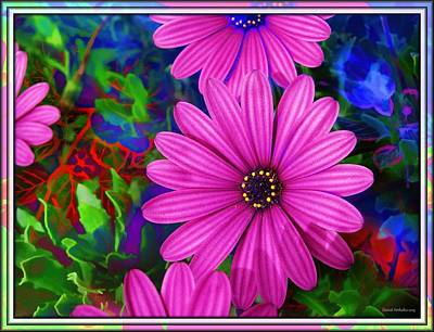 Flowers Photograph - Pink Daisies by Daniel  Arrhakis