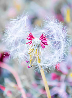 Happy Photograph - Pink Dandelion by Parker Cunningham