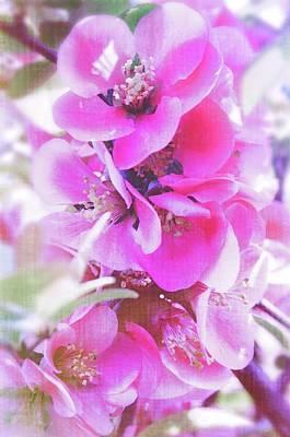 Photograph - Pink Day  by Sotiris Filippou