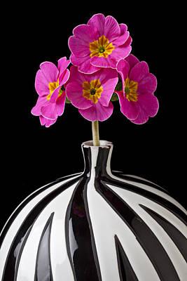Pink English Primrose Print by Garry Gay