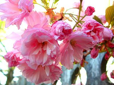 Pink Flowers Print by D R TeesT