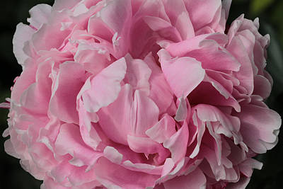 Pink Gem  Print by Connie Handscomb