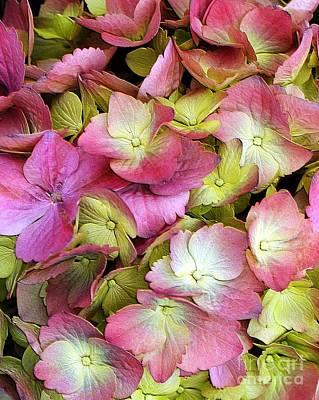 Pink Hydrangea Print by Kathleen Struckle