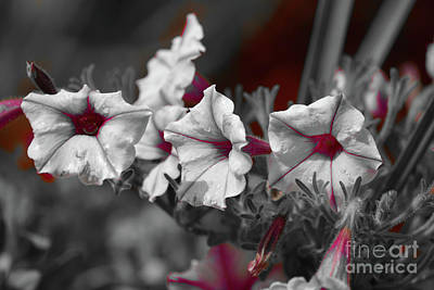 Photograph - Pink In Petunias by Patti Whitten