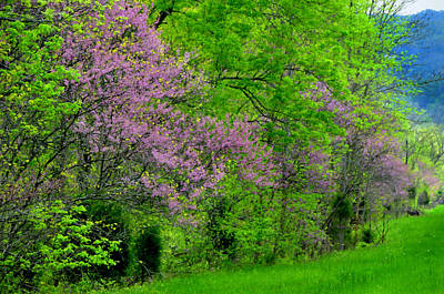 Huisken Digital Art - Pink In Spring by Lyle  Huisken