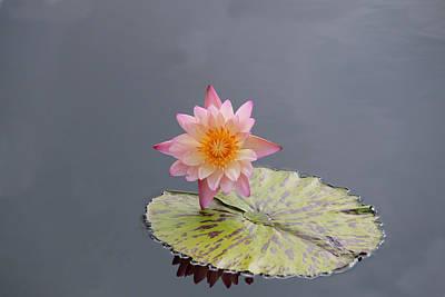 Pink Lotus Print by Sharon Batdorf