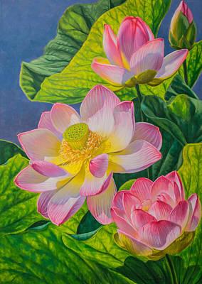Pink Lotuses Print by Fiona Craig