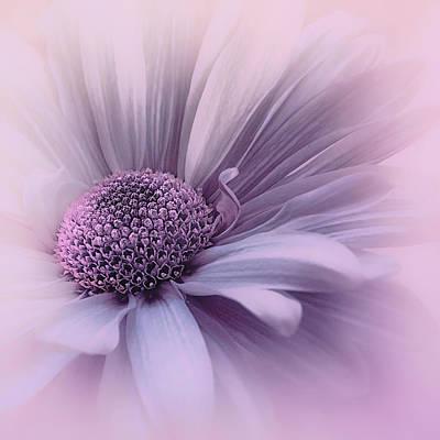 Photograph - Pink Mist by Darlene Kwiatkowski