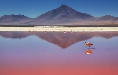 Flamingo Photograph - Pink Morning by Margarita Chernilova