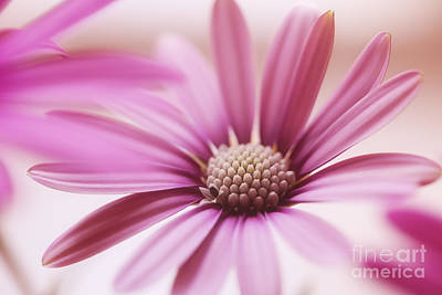 Hjbh Photograph - Pink Petals.. by LHJB Photography