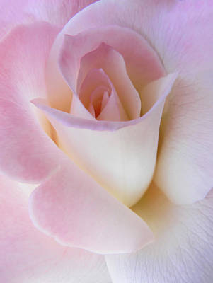 Rose Portrait Photograph - Pink Rose Beginnings by Jennie Marie Schell