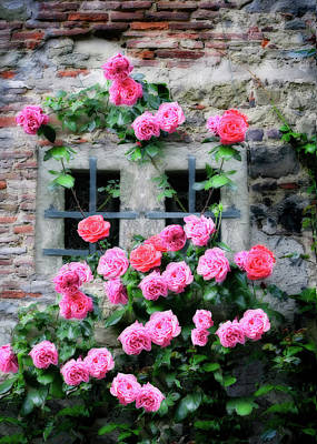 Pompons Photograph - Pink Rose Facade by Al Hurley