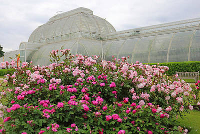 Roses Photograph - Pink Roses At Kew by Rumyana Whitcher